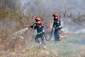 Vatra na šumskom području